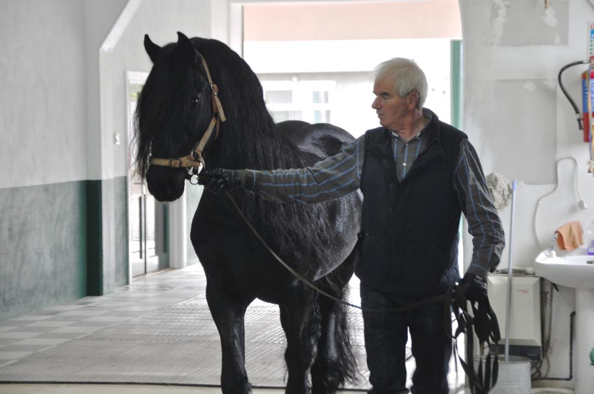 Mervyn Moon, Moonstone Horses, Friesian Breeder