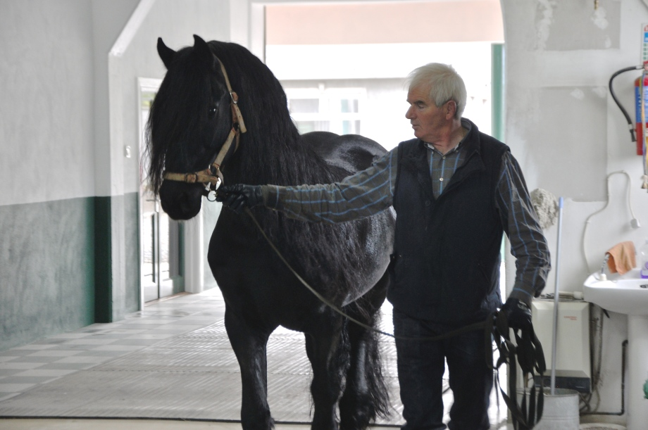 Mervyn Moon, Moonstone Horses, Friesian Breeder